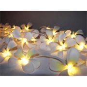 White Frangipani Style - fairy lights